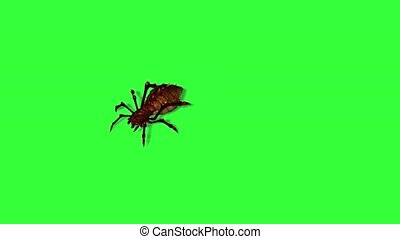 fantasy spider is running - 2 different views with shadow on...