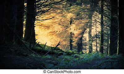 Fantasy Sunrise In The Forest - Beautiful scene of enchanted...