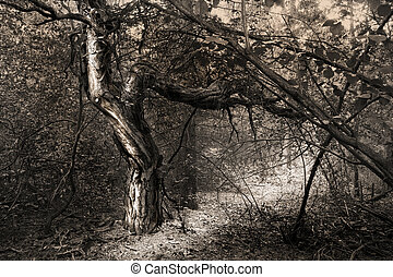 Fantasy tree in forest