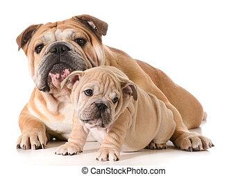 far, hunde, søn