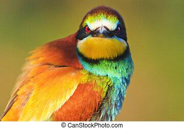 farbe, böser , vogel- aufpassen