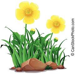 farbe, blumen, gelber , butterblumen