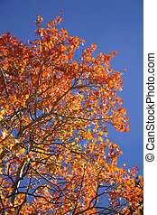 farbe, herbst