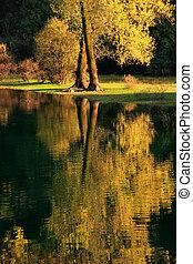 farbe, montenegro, baum, reflektiert, fluß, herbst, ...