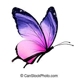 farbe, papillon, freigestellt, weiß, hintergrund