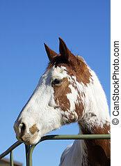 farbe, pferd, porträt