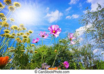 farbenfreudige blumen, blau, himmelsgewölbe, in, sommer