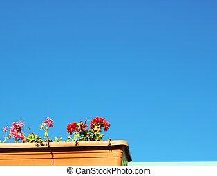 farbenfreudige blumen, in, blauer himmel