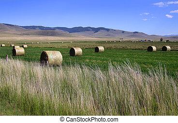 fardos de heno, en, el, campos