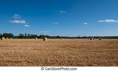 fardos, orelhas, rural., fazenda, recolhido, feno, pilhas, ...