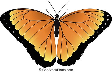 farfalla, arancia, vettore