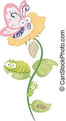farfalla, ciclo vitale