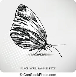 farfalla, drawing., vettore, mano
