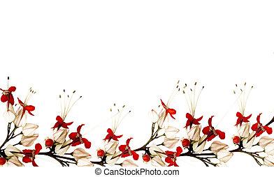 farfalla, fiore, nero rosso