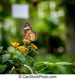 farfalla, fiori