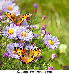 farfalla, fiori, due