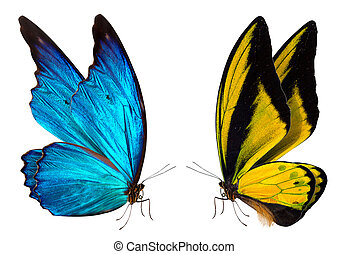 farfalla, macro, fondo