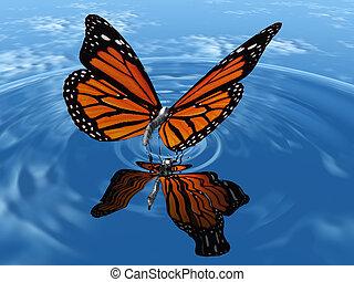 farfalla, monarca, acqua, atterraggio
