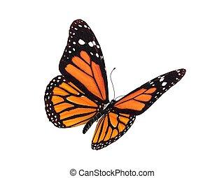 farfalla, monarca, render, digitale
