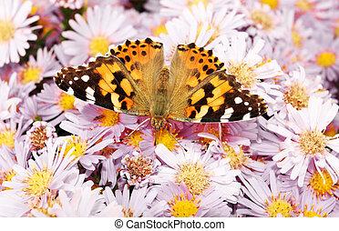 farfalla monarca, su, fiori