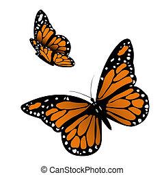 farfalla, monarca