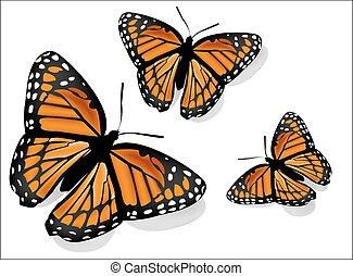 farfalla, realistico, bianco, vettore, fondo