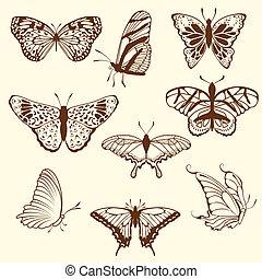 farfalla, schizzo, set, differnet