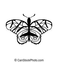 farfalla, schizzo