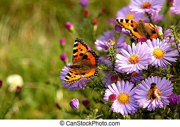 farfalla, su, fiori