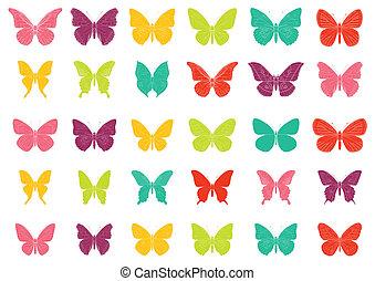 farfalla, tropiccal, colorito