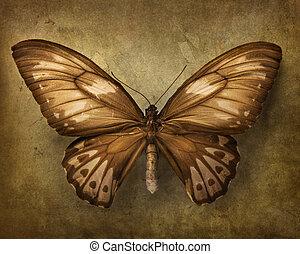 farfalla, vendemmia, fondo