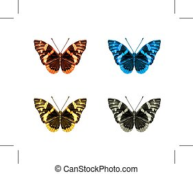 farfalle, icone