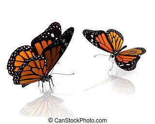 farfalle monarca, due