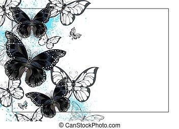 farfalle, sfondo nero