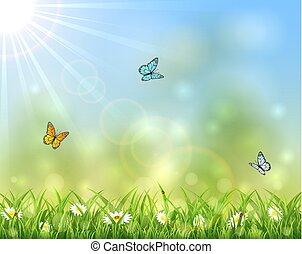 farfalle, soleggiato, fondo