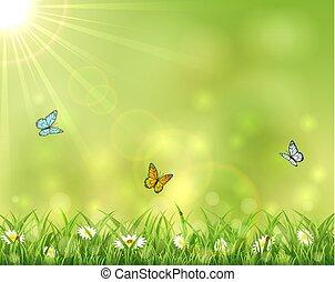 farfalle, soleggiato, tre, fondo