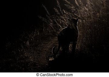 farlig, leopard, promenad, mörker, till, jakt, för, rov, artistisk, omvandling
