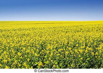 Farm #5 - Field of Flowers - Western Cape, South Africa