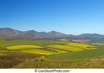 Farm #6 - Field of Flowers - Western Cape, South Africa