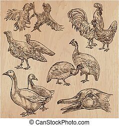 farm animals, birds - an hand drawn vector pack, collection.