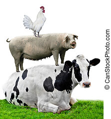 Farm animals. Cow, pig and chicken stand on each other