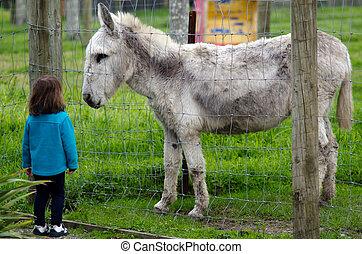 Farm Animals - Donkey