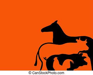 Farm animals arranged in original way