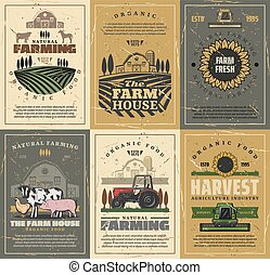 Farm animals, field, tractor and barn. Agriculture