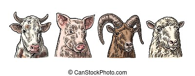 Farm animals icon set. Pig, cow, sheep and goat heads