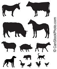 Farm animals - Vector illustration of various farm animals...