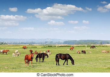 Farm animals in pasture spring season