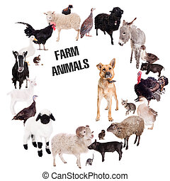 Farm animals set on white