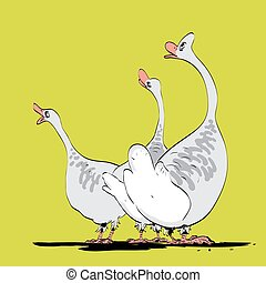 Farm bird wild or domestic goose