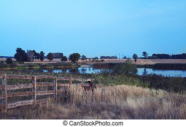 Farm by the lake, fenced with a small wooden fence.
